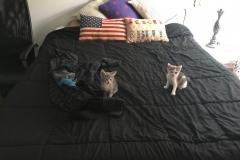 kittens-on-bed